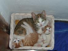 Wenns bei uns Katzennachwuchs gibt, freuen sich groß und klein.